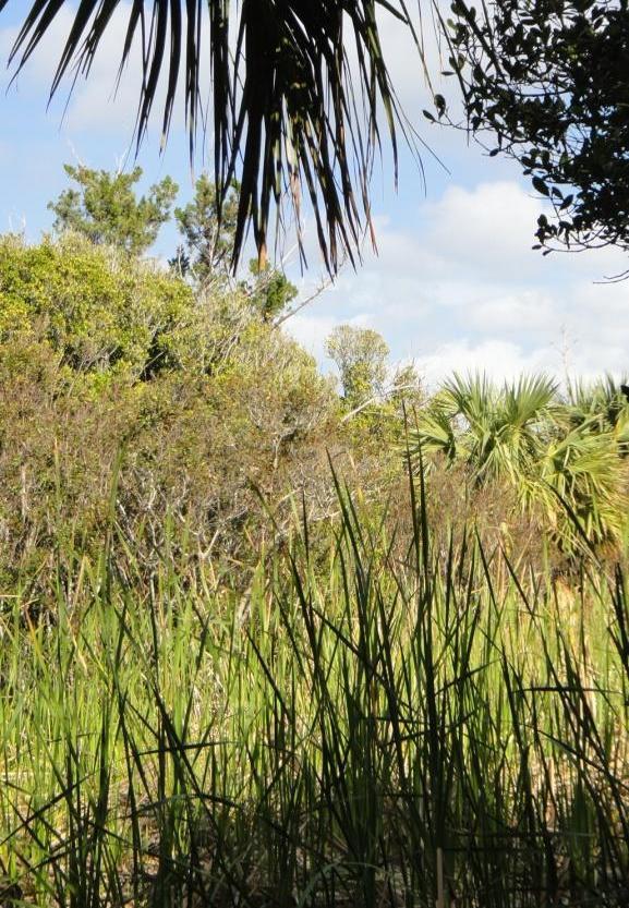 Nonsuch Marsh
