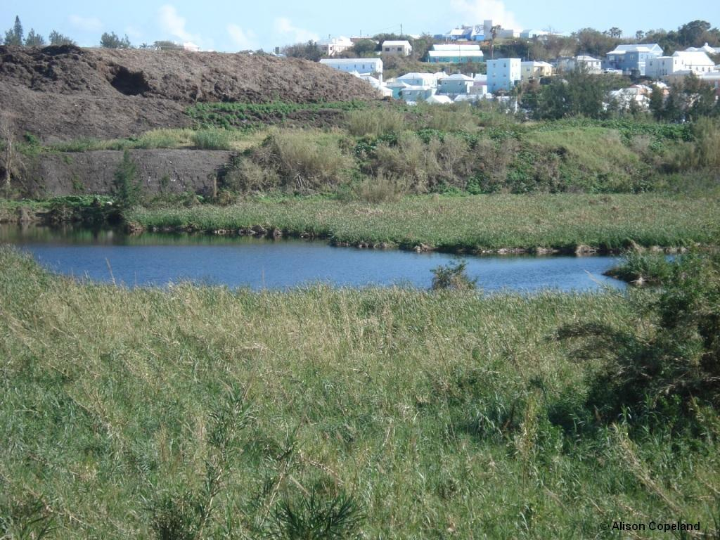 pembroke marsh pond