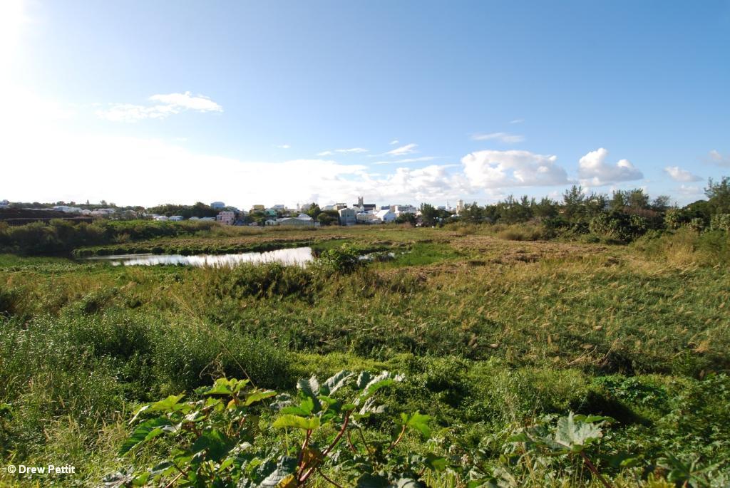 Pembroke Marsh