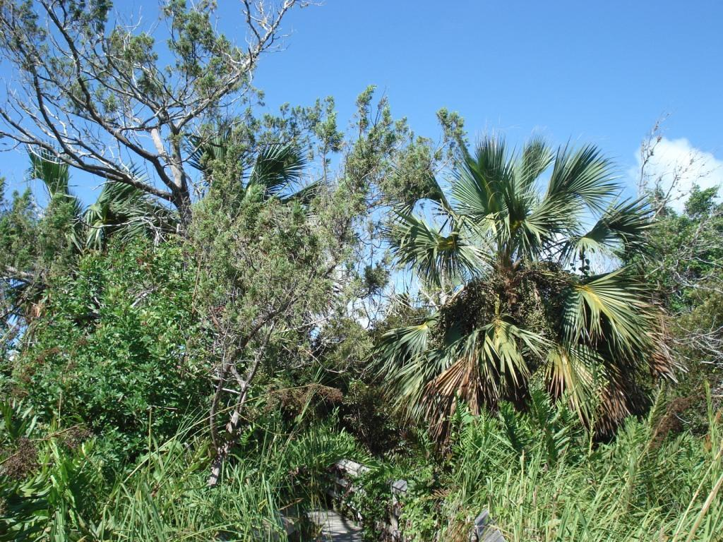 Endemic trees, Paget Marsh