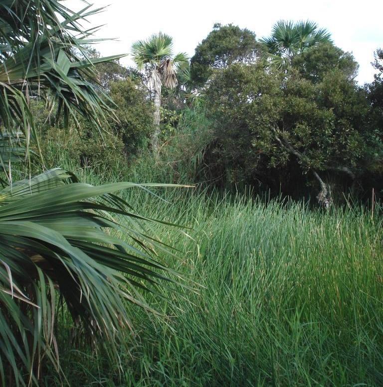 Devonshire Marsh