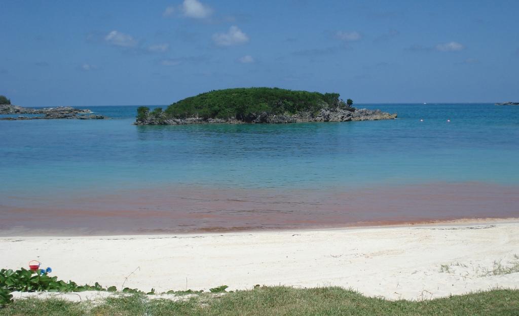 Coral Spawn Bermuda