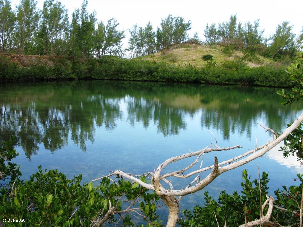 Coney Island Pond