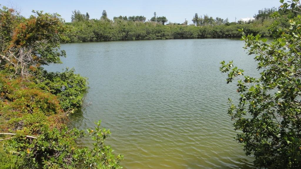 Trott's Pond