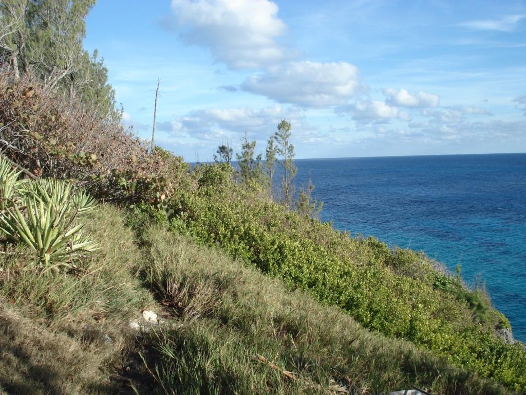 Coastal Forest Habitat