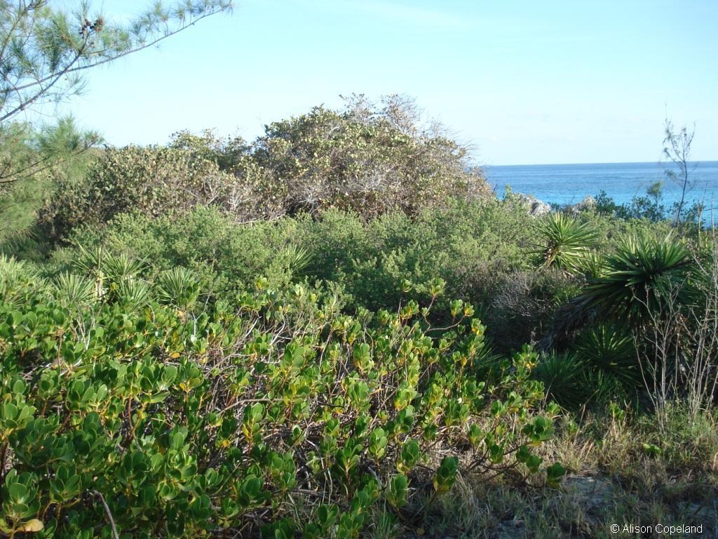 coastal forest stonehole bay