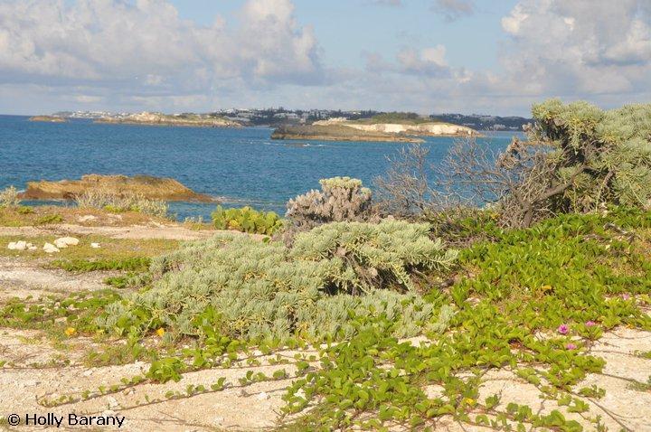 coastal vegetation