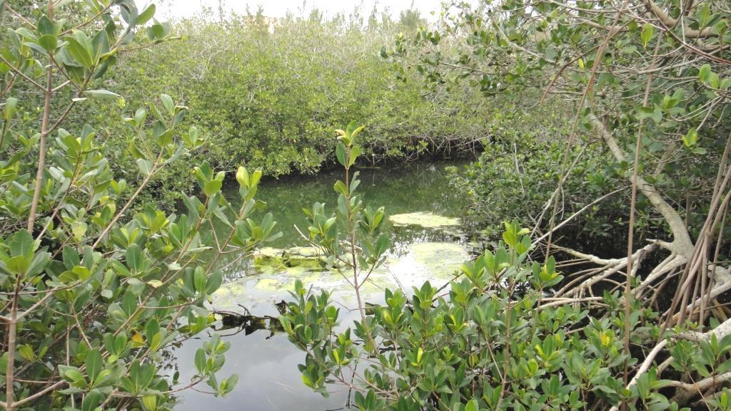 shelly bay NR pond_c.JPG