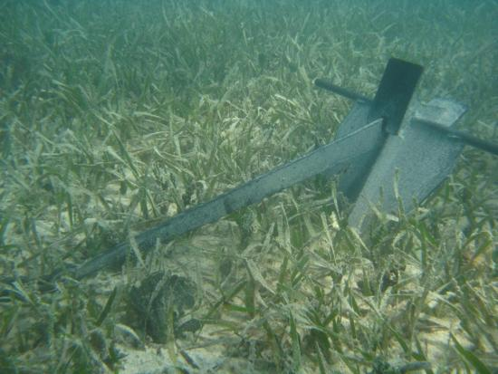 Please don't drop your anchor in a seagrass bed