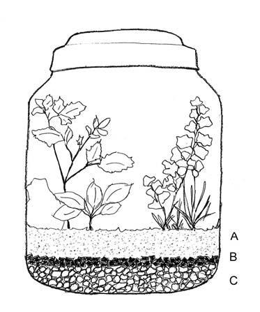 Different sources of information will give slightly different, but still correct, methods for assembling a terrarium. This illustration shows a planted terrarium with layers of (A) potting mix, (B) charcoal, (C) drainage material. The additional layer of sphagnum or peat moss is recommended but considered optional. If used, the layer of moss should be placed between layers (B) and (C).