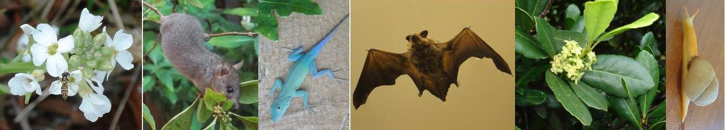 bat rat blue lizard.jpg