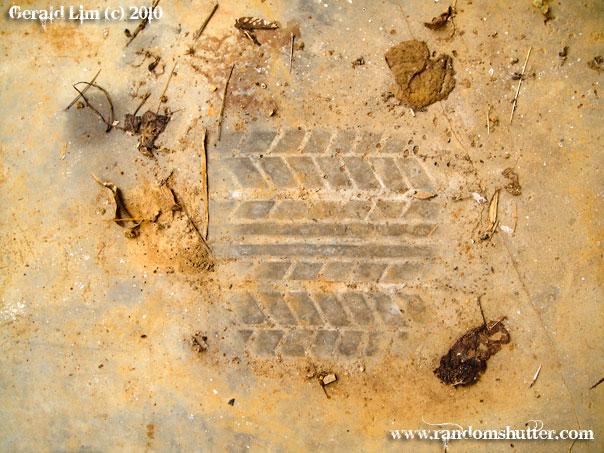 0223-014-celica-prints.jpg