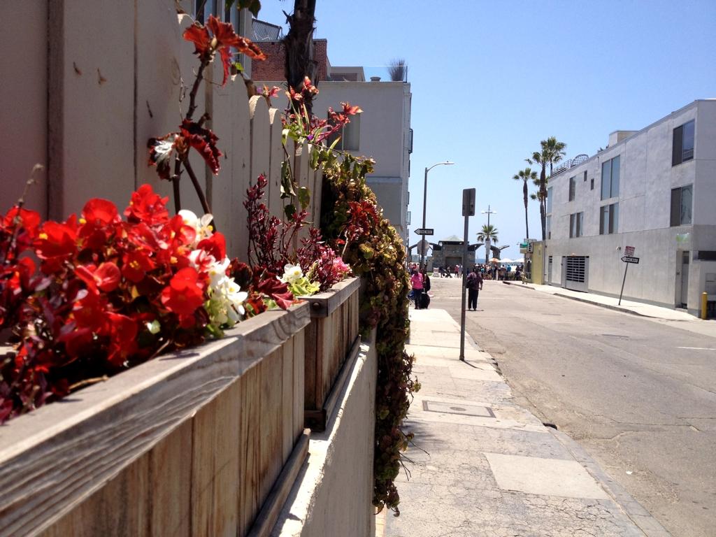 SidewalkFlowers.jpg