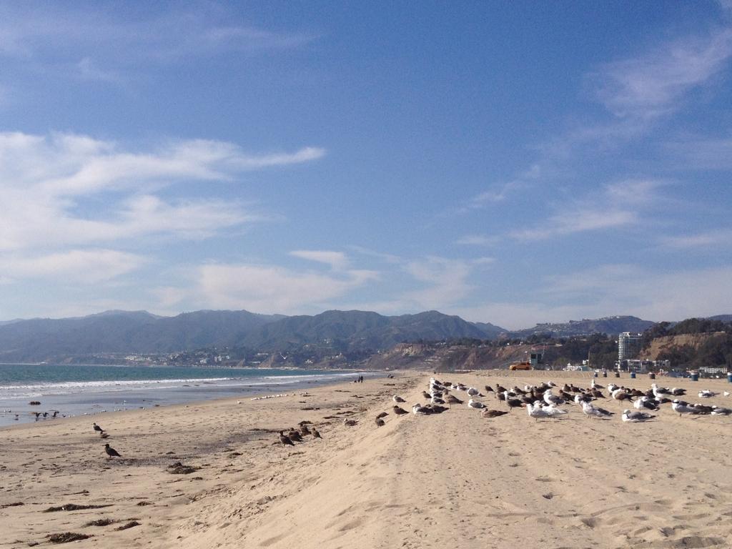 Santa-Monica-Seagulls.jpg