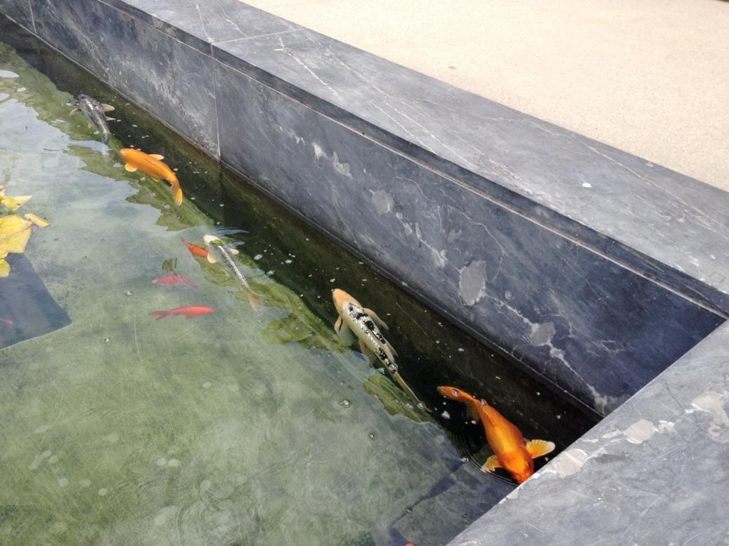 Getty-Villa-Goldfish.jpg