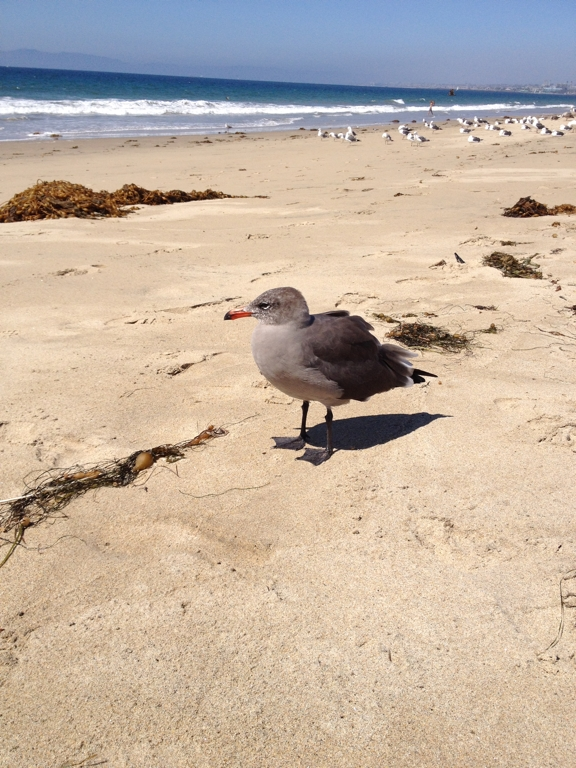 One last photo from the beach. This seagull was being friendly in hopes of getting a snack. Didn't work.