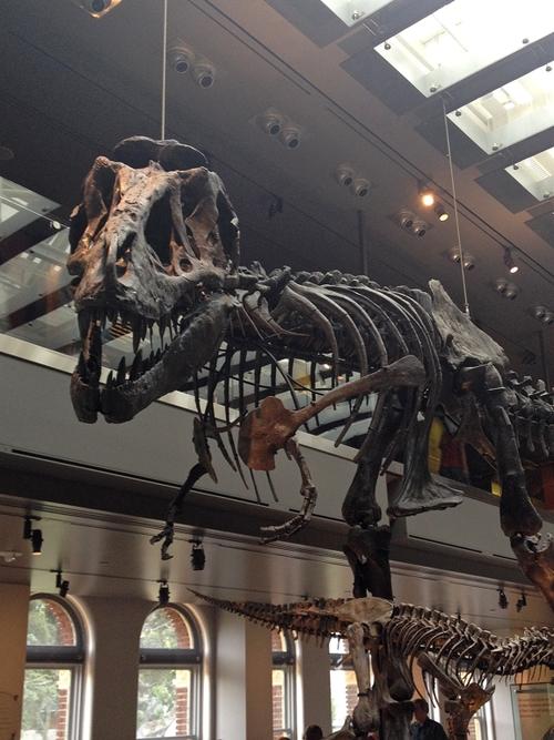 natural-history-museum.jpeg