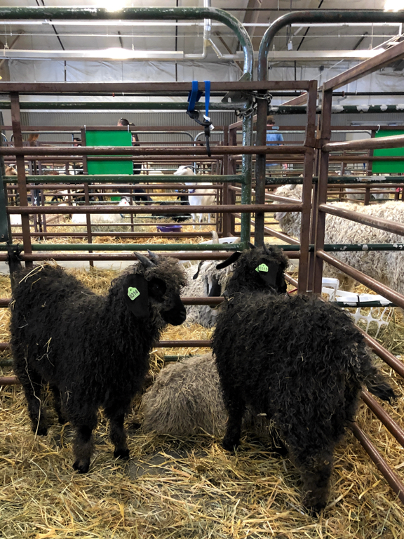 Learn how to shop at a fiber festival, and follow along with me for the day at Estes Park Wool Market 2019. | withwool.com  #fiberfestival #epwoolmarket #spinning #knitting #estespark #goats