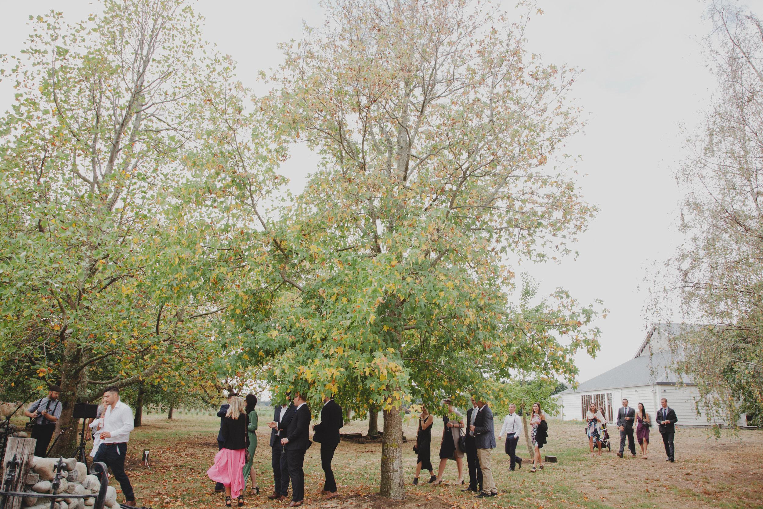 wellington wedding photography NZ - 1023.JPG