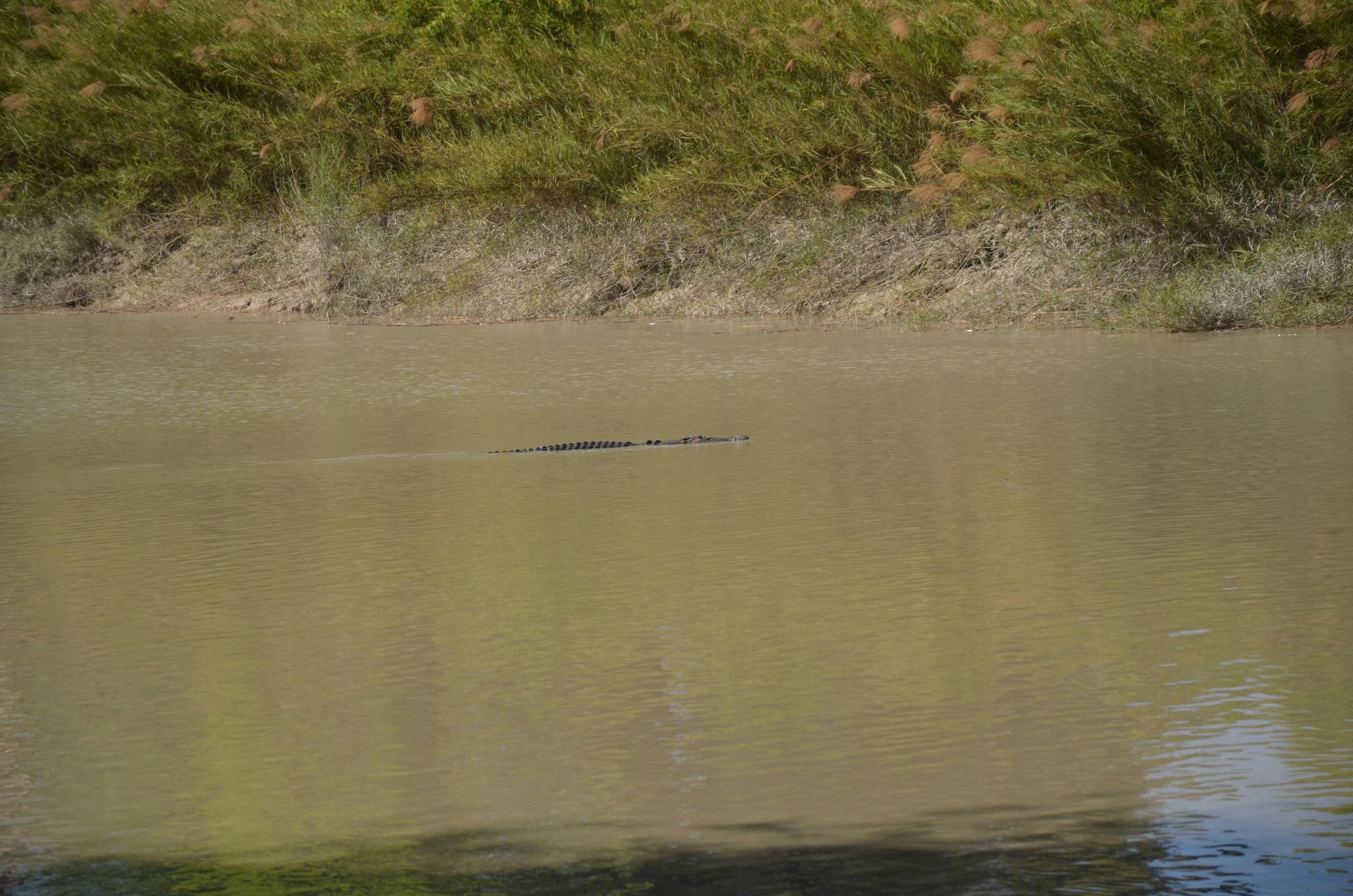 That's not a logodile that's a crocodile!