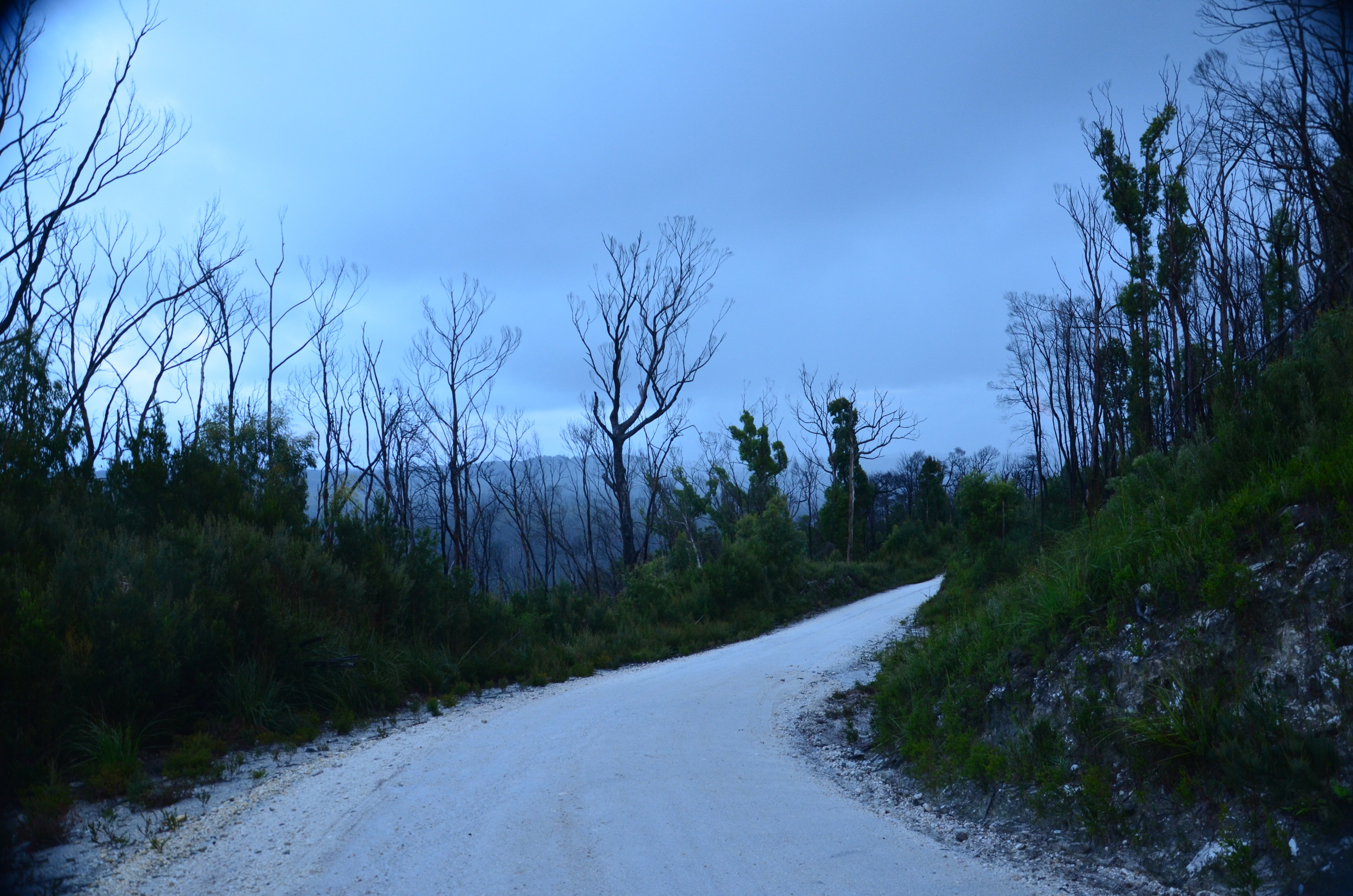The beautiful  w hite silica rd., through the Tarkine Wilderness.