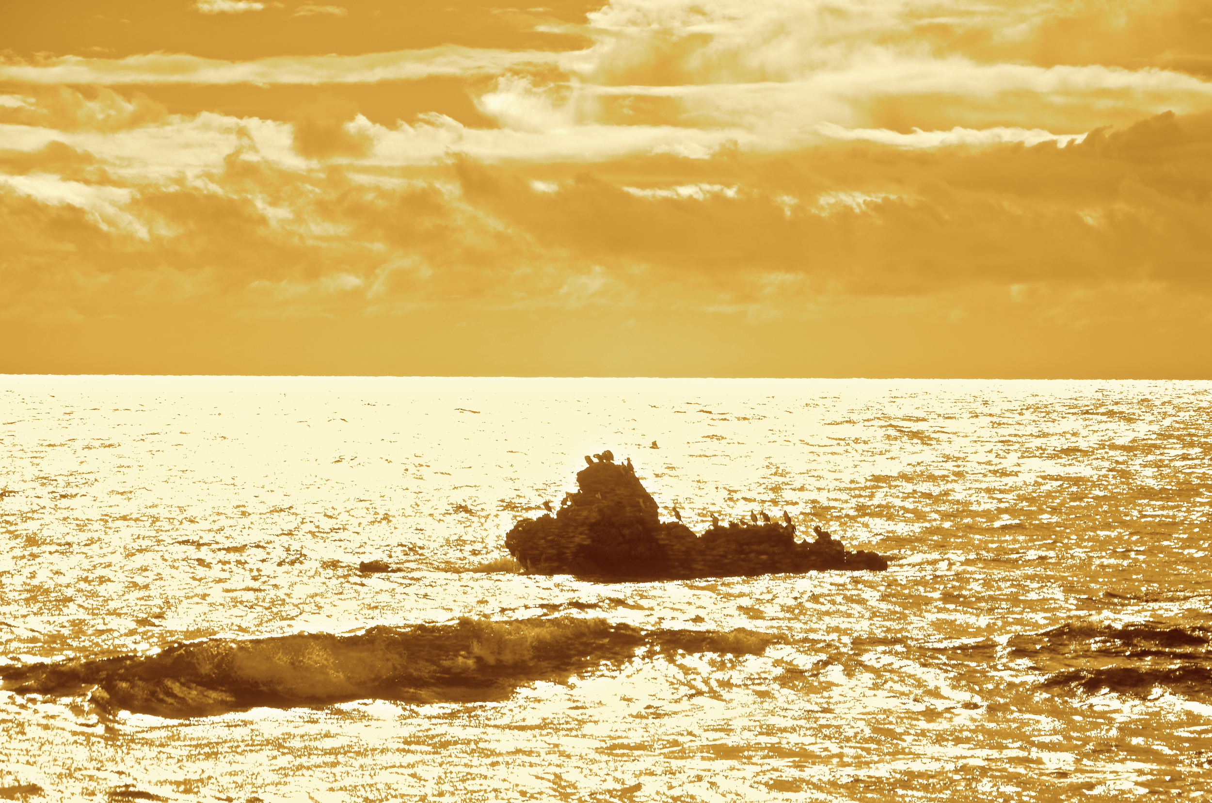 Golden morning in Penguin.