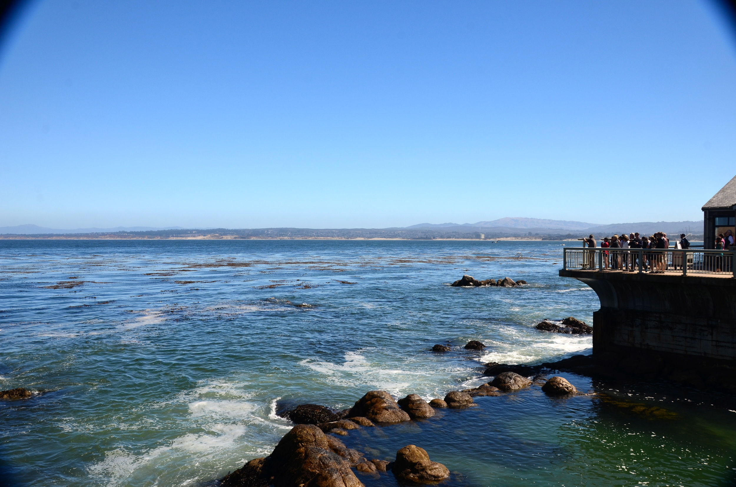 ne of my favorite places on earth…MontereyBay Aquarium.