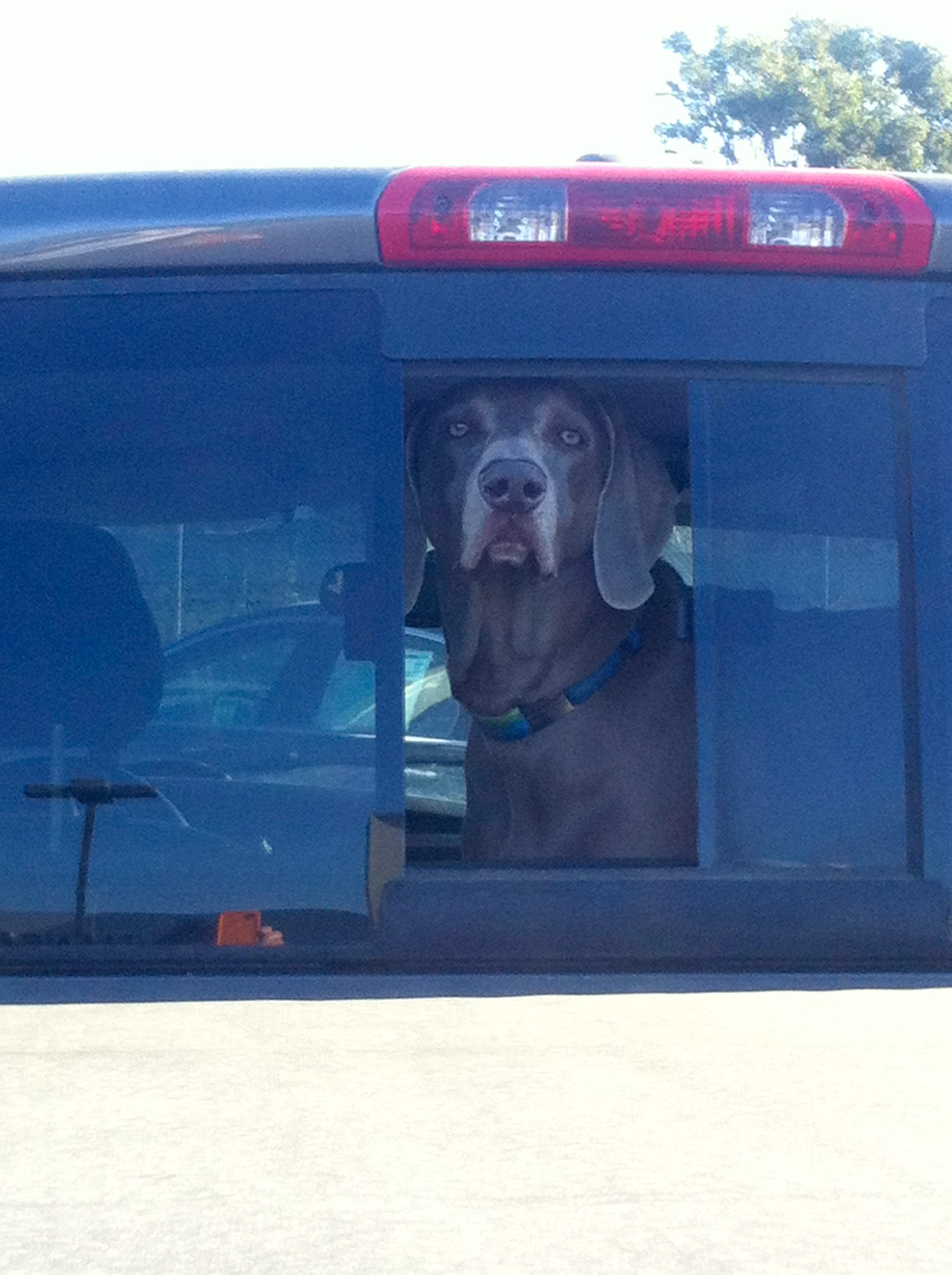 Really, are we making another trip?!