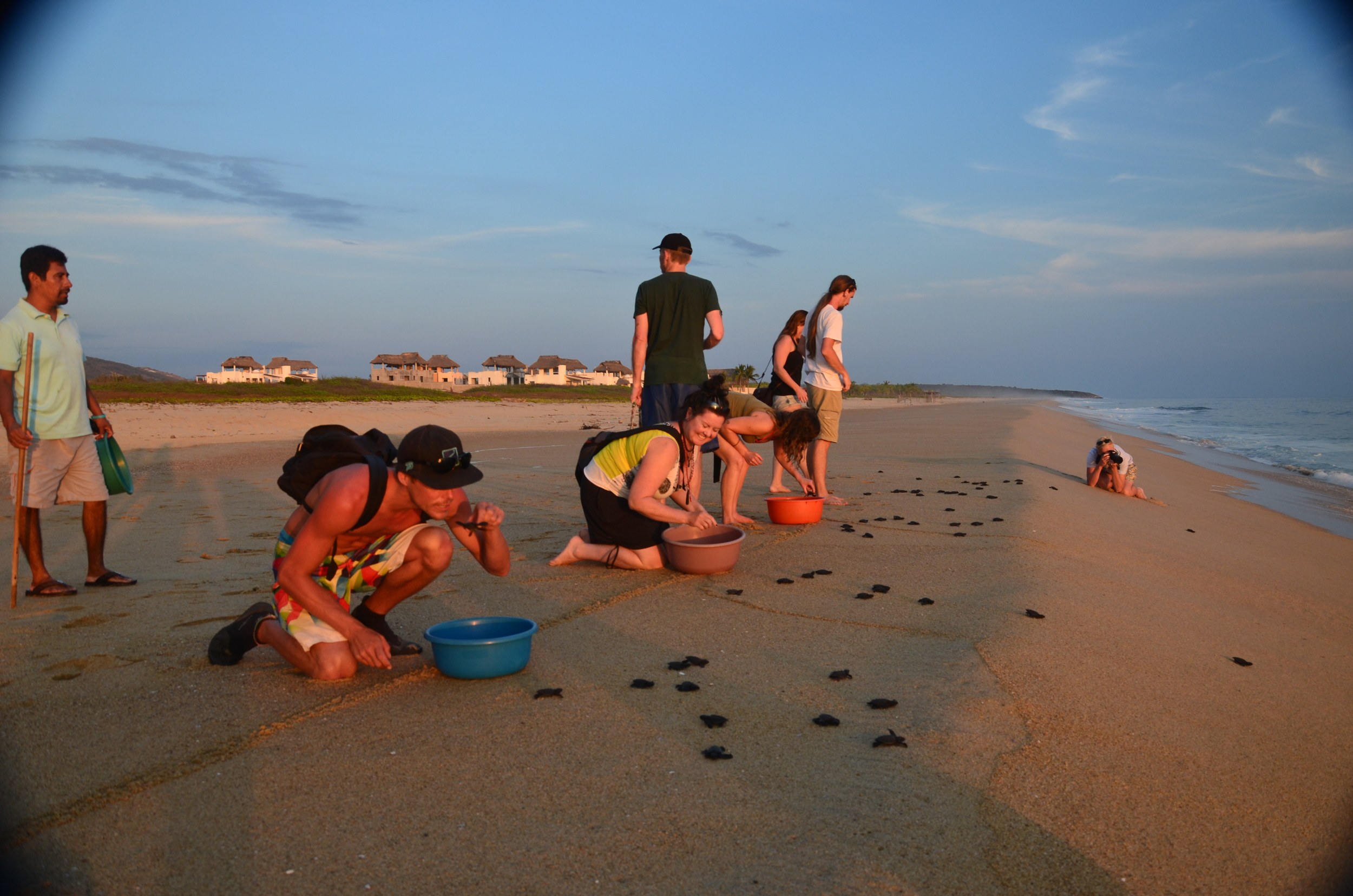 Releasing the smallest baby tortugas…the Olive Ridley.  We returned a second time to the site!  It was such an amazing experience