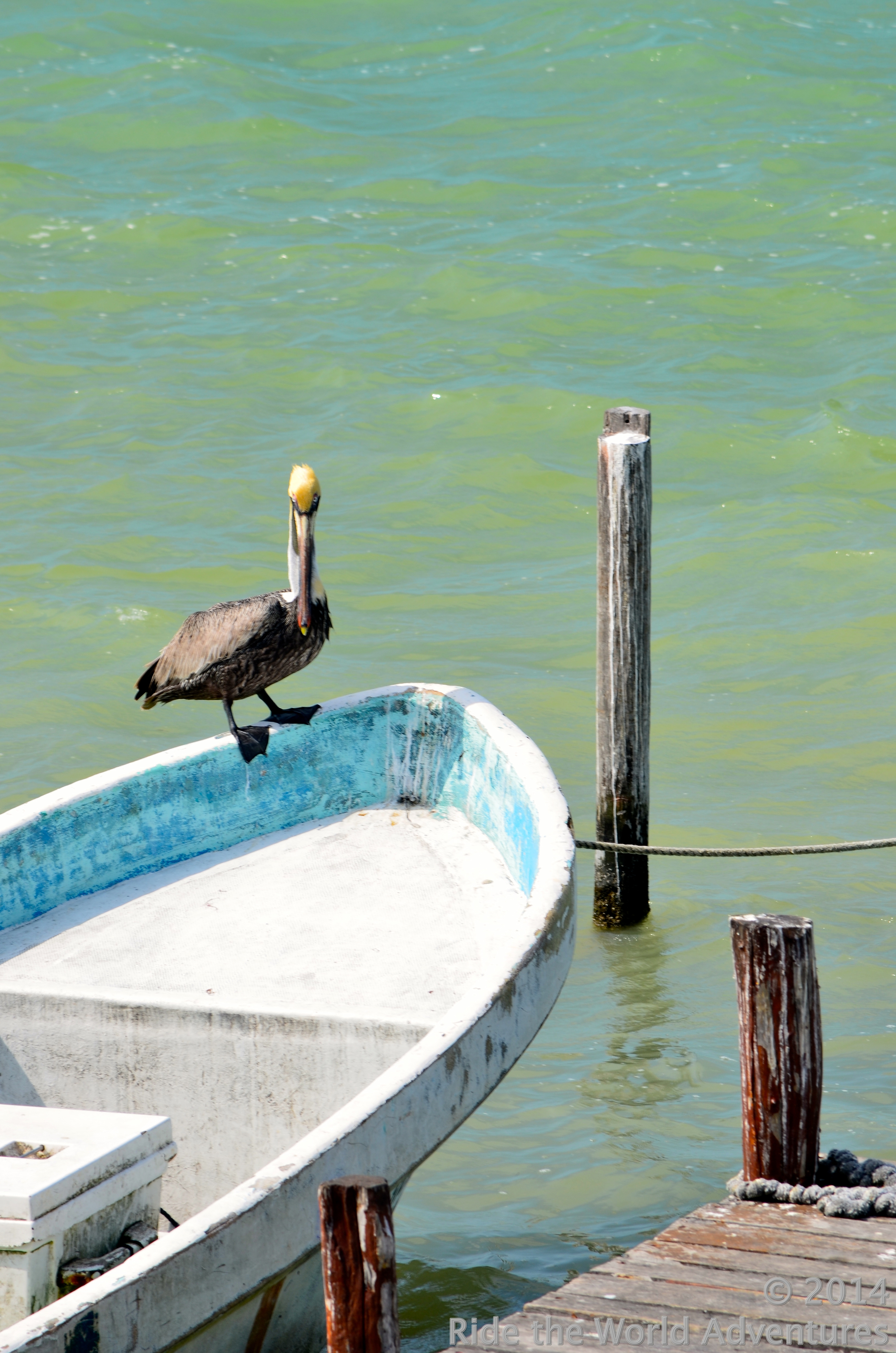 Love the pelicans and the paint!