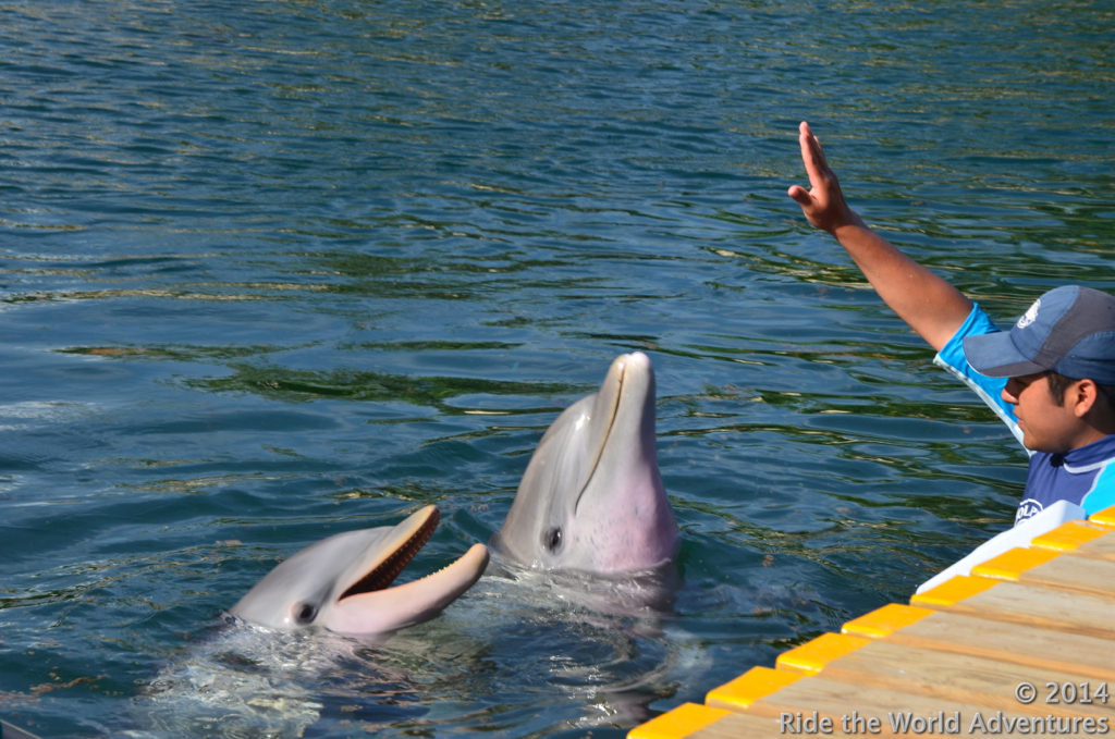 Time to train dolphins, in-between swimming with dolphins.