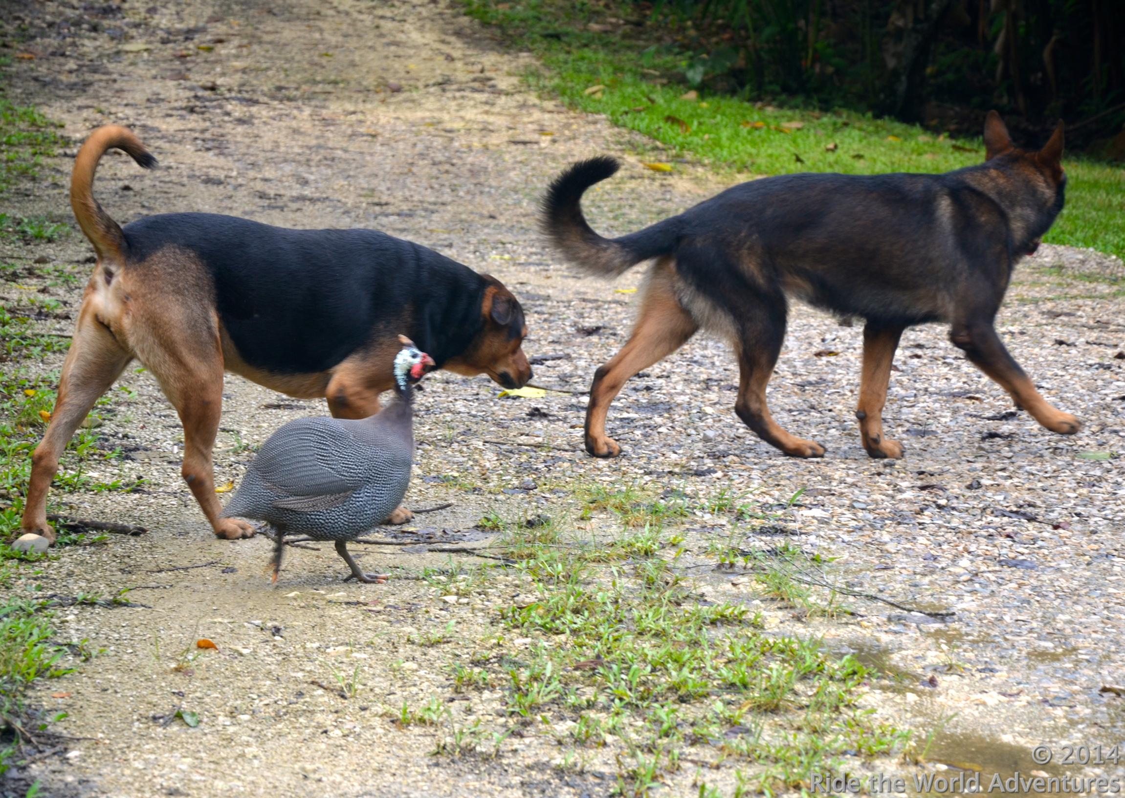 Pec, Digby & Peep