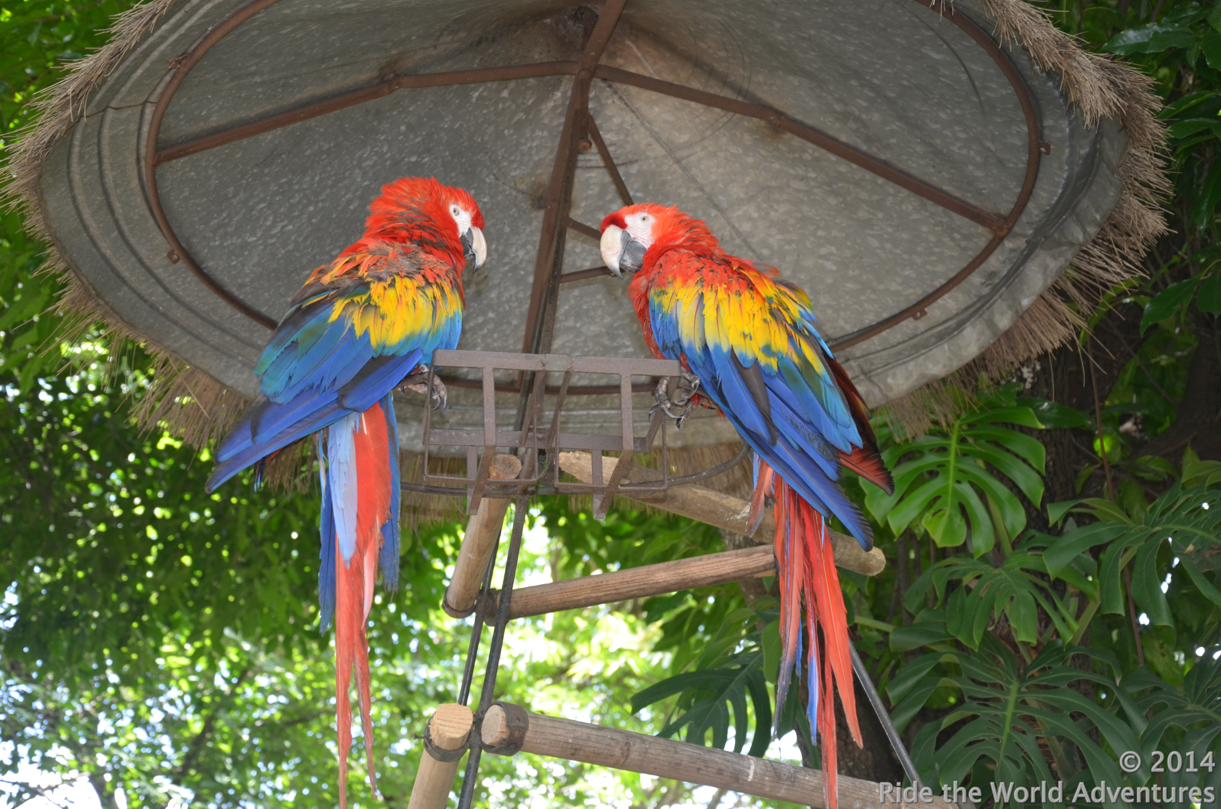 and friendly macaw's.