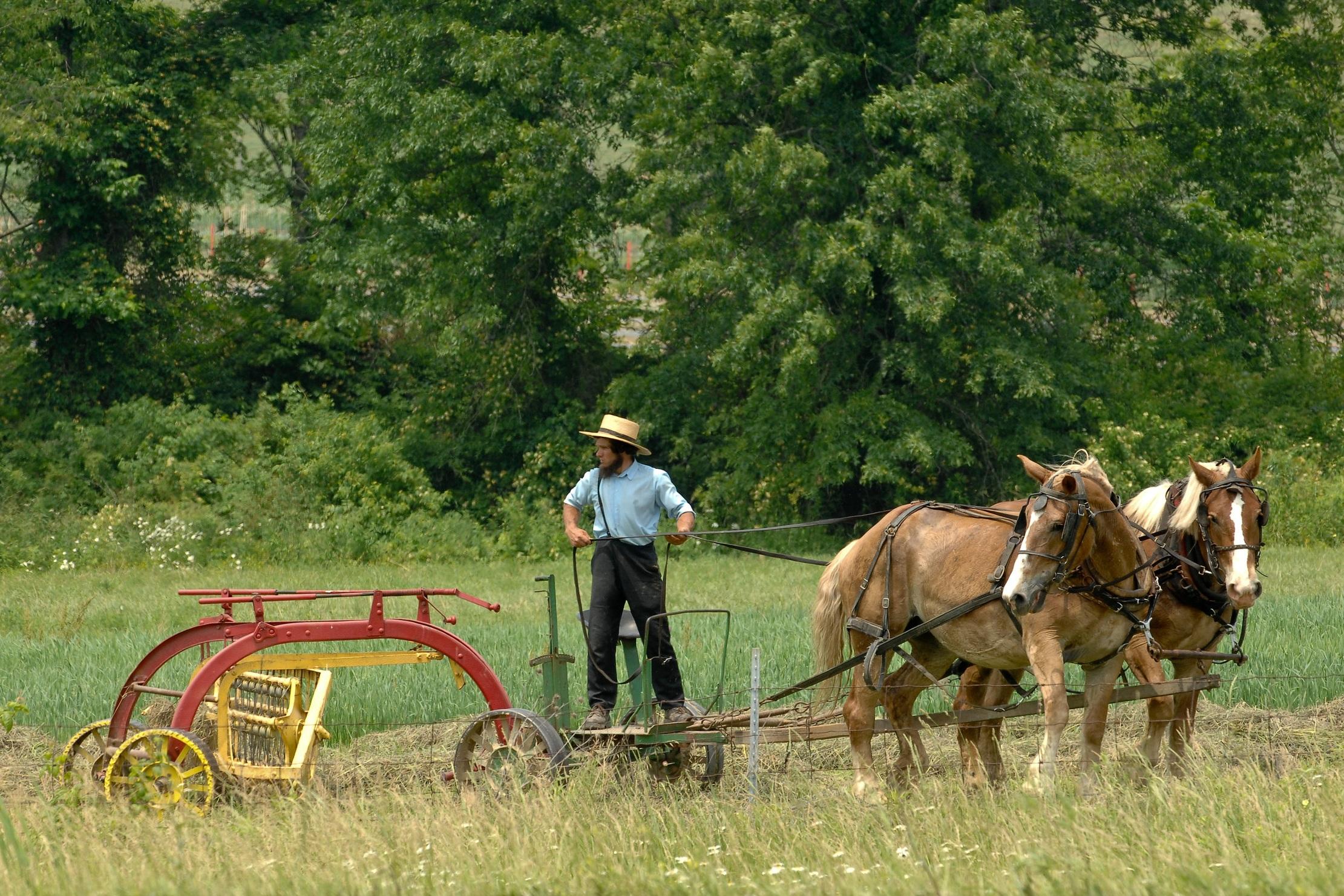 AmishRakingHay.jpg