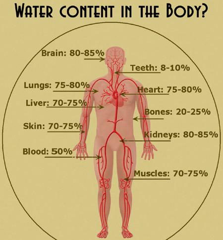water_content_body_450w.jpg