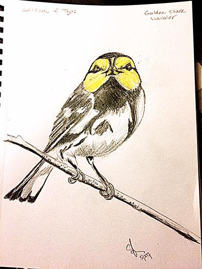 golden-cheeked-warbler-sketch.jpg