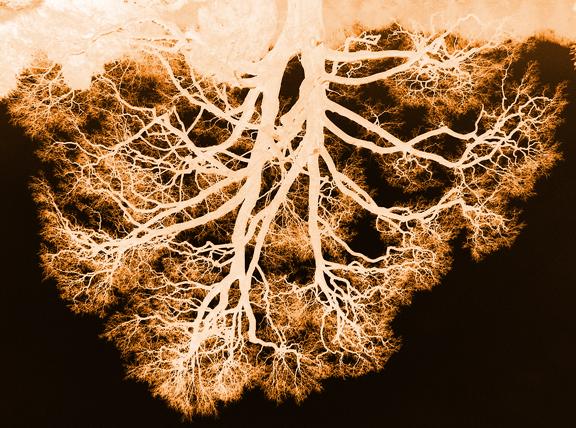 Tree Roots?.jpg
