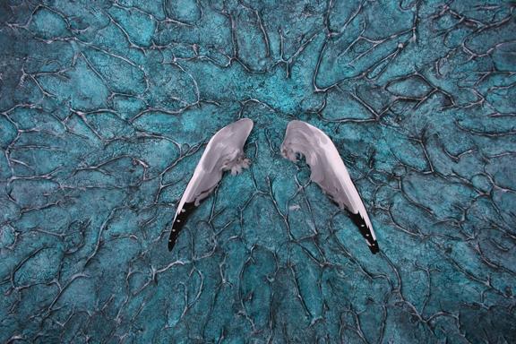 Wings IMG_4877.jpg