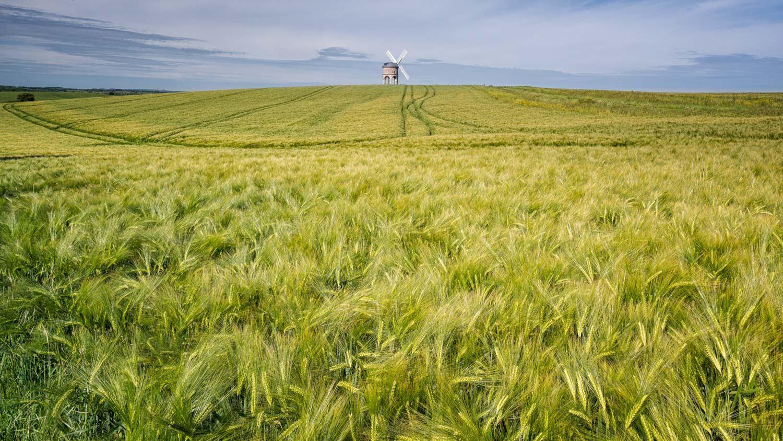 Barley Swirl