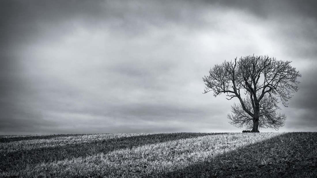 Fosse Tree - Jan 2015