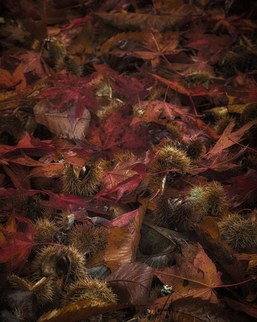 Autumn Litter - Nov 2015