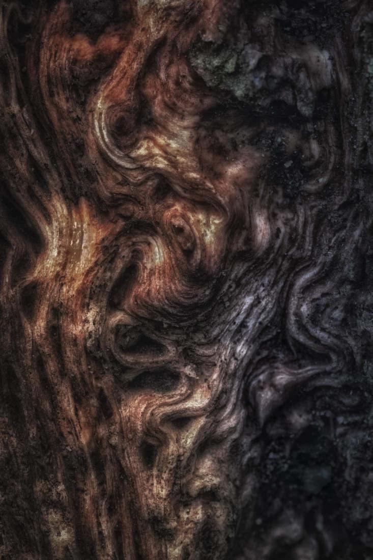 bark study 24