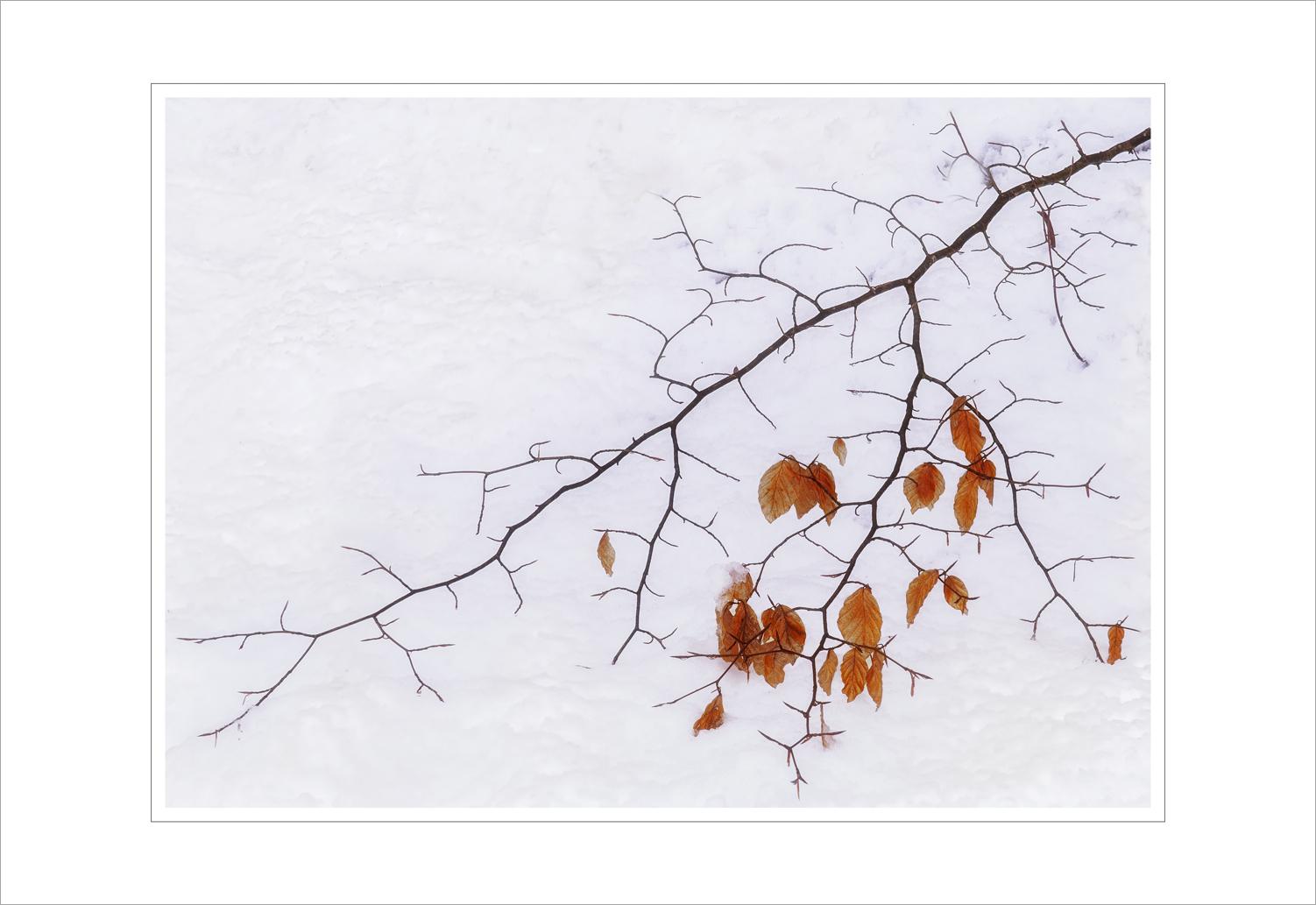 015 Winter Gold