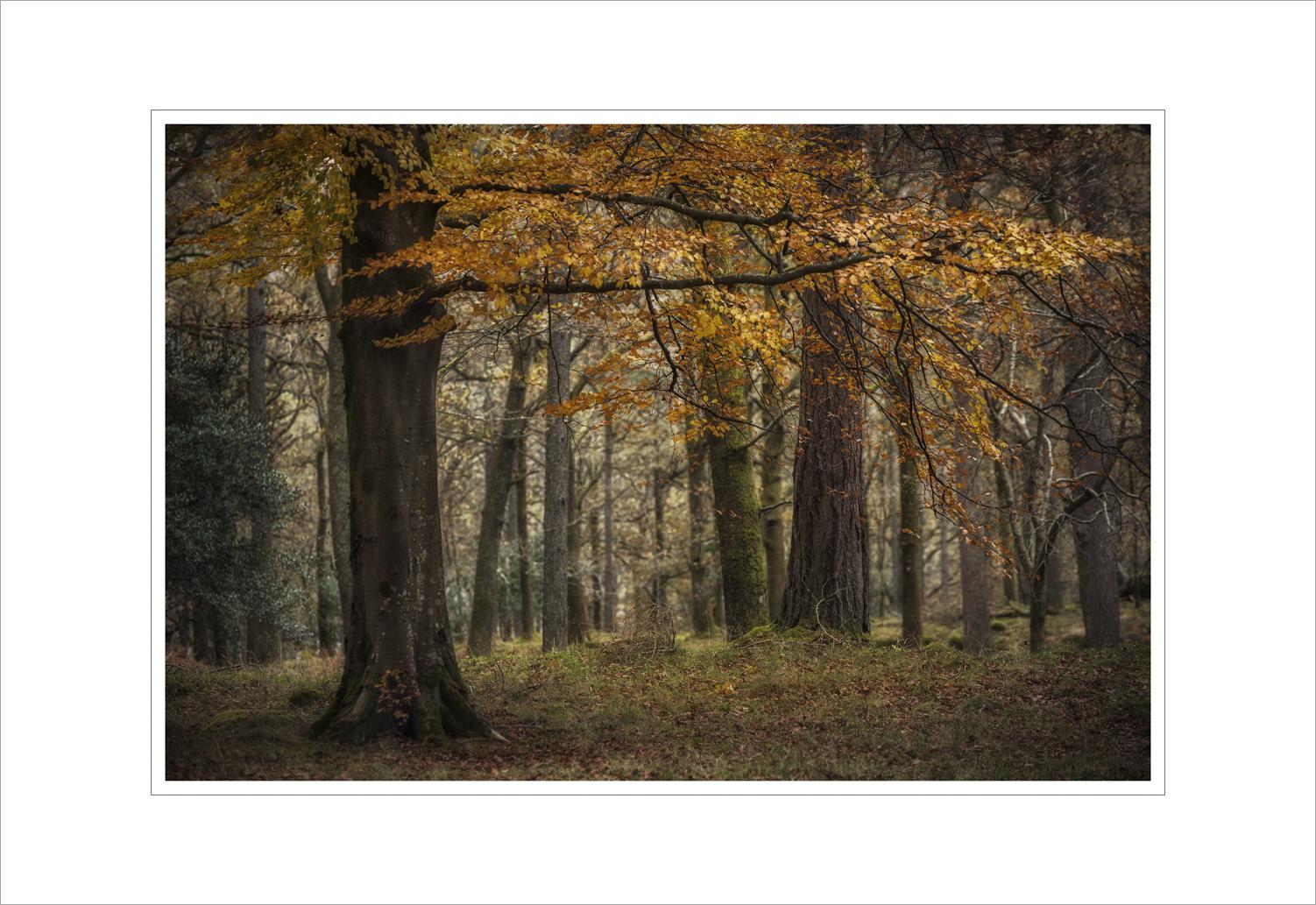 016 Manesty Woods