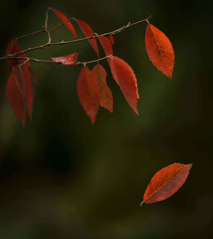 Batsford Arboretum photographic workshop