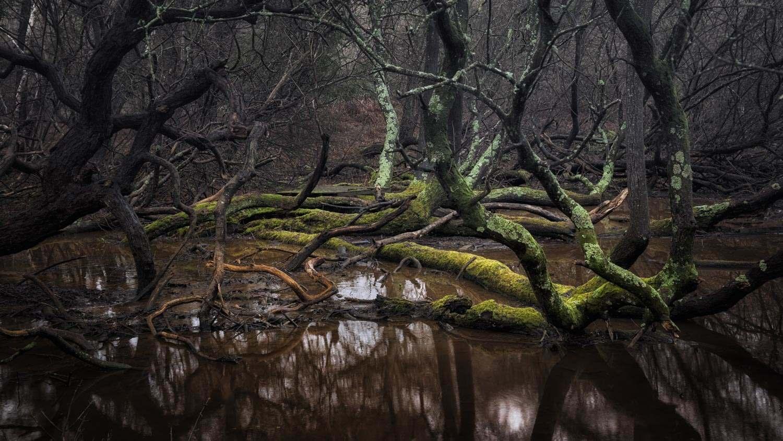 Swamp - Dorset Jan 2016