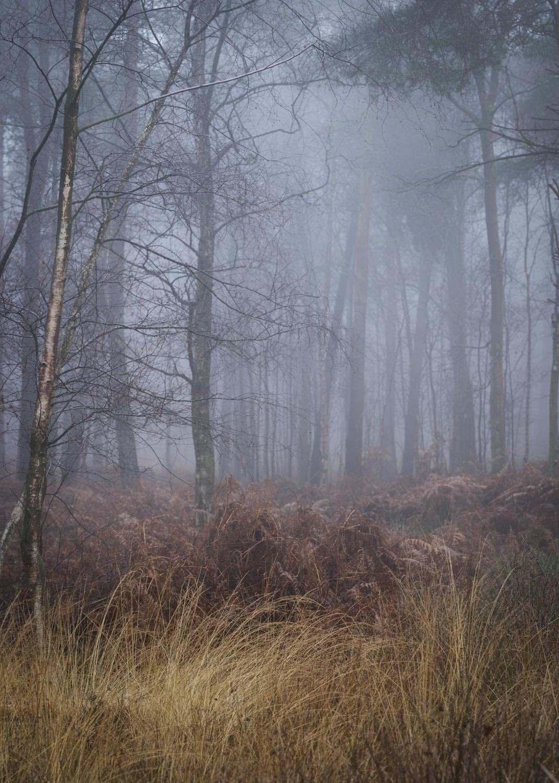Hay Woods, Lapworth