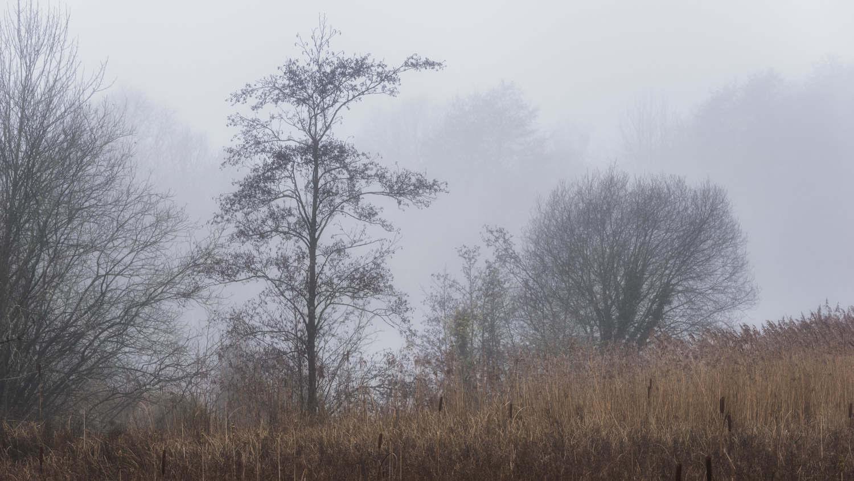 Brandon Marsh Nature Reserve