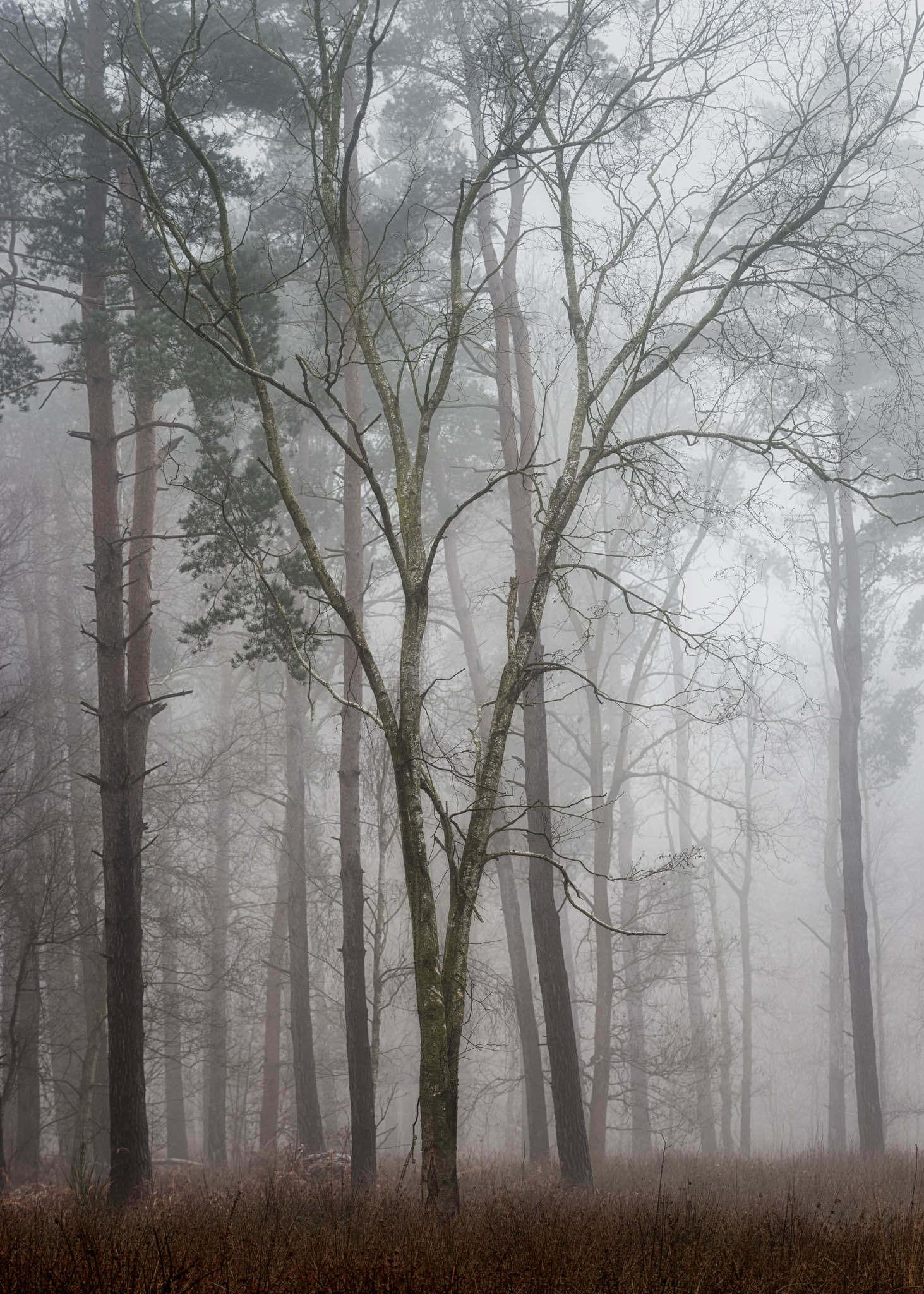 Hay Woods - 6