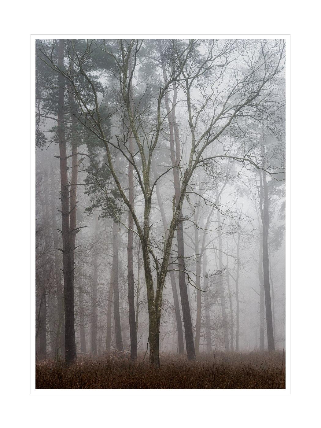 Hay Woods Split